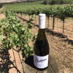 hiraz bottle in the Barossa Valley vineyard